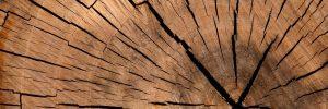lumber, log, wood